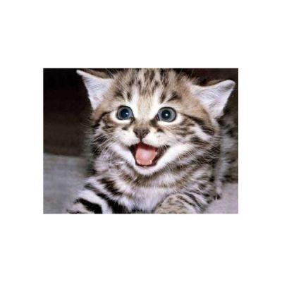 Γάτας
